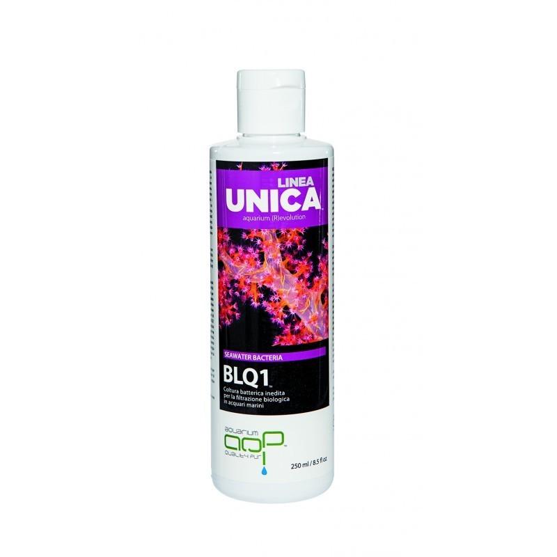 Blq1 Linea Unica